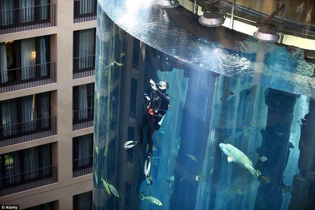 Thang máy bể cá có một không hai, cái đep thang máy